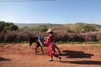 On retrouve des ânes aussi sur les routes mais il demeure sur l'accotement