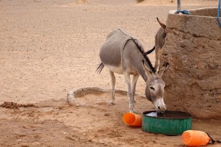 Puit et abreuvoir pour les ânes