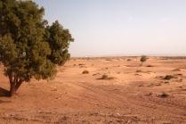 Des kilomètres de paysage désertique