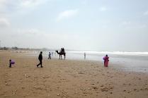 On se sent en Afrique avec des dromadaires sur la plage
