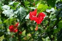 Un fleur inusitée