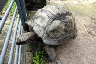 La tortue géante qui est venue nous voir