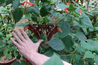 Les papillons de nuits sont plutôt calme