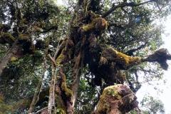 L'une des forets les plus agée 225 millions d'années