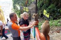 Les singes attirent toujours notre attention