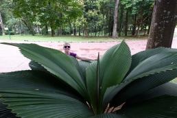 Le jardin botanique de Putrajaya, encore une fois, la chaleur a raison de nous.