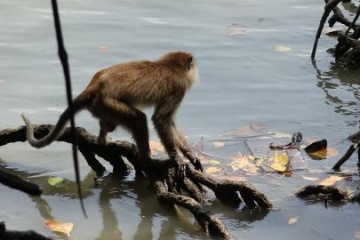 Un singe nous rend visite