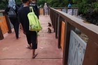 Nous sommes accueillis par des singes