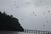 Nourrir les aigles sous la pluie