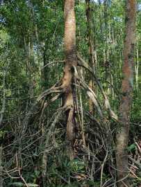 D'autres mangroves
