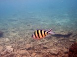 Des poissons de toutes les couleurs
