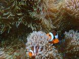 Nous avons trouvé Nemo