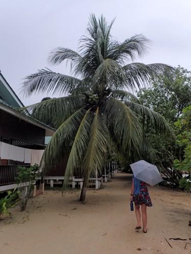 Il nous laisse quelques brins de pluie (tropicale naturellement)