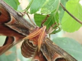 Et leurs antennes poilues