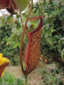 Une plante qui se nourrit d'insecte
