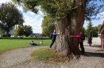 Un très gros arbre