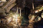 La végétation provient des lampes dans la caverne